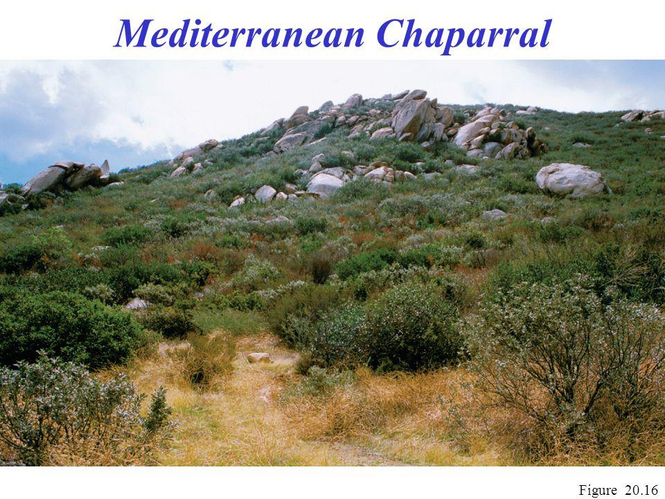 Mediterranean Chaparral