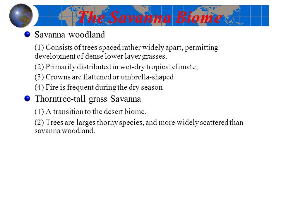 The Savanna Biome Savanna woodland
