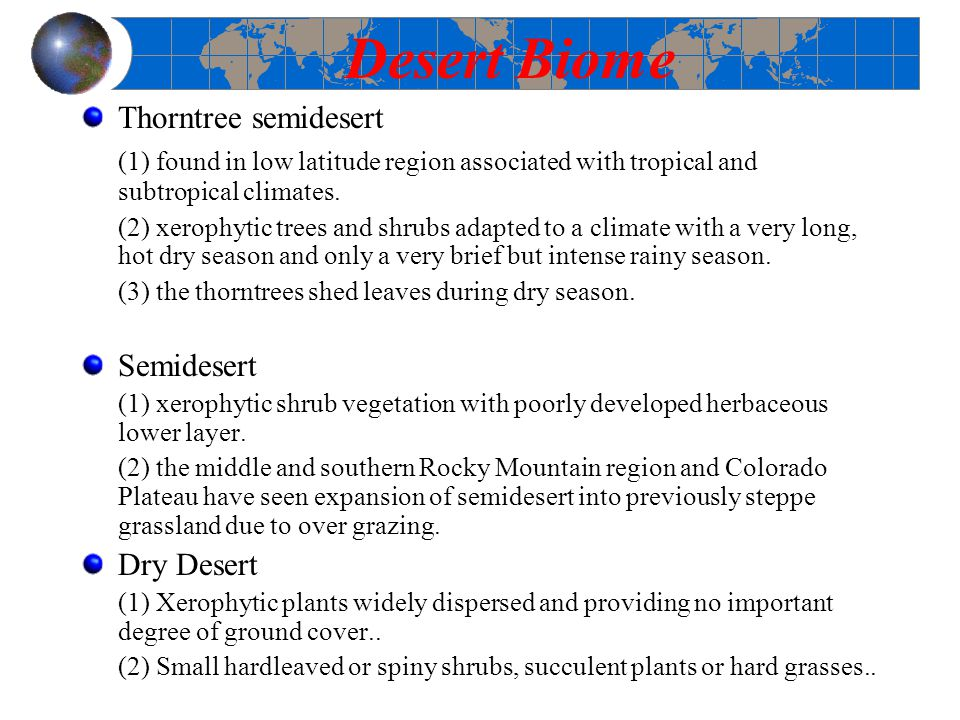 Desert Biome Thorntree semidesert