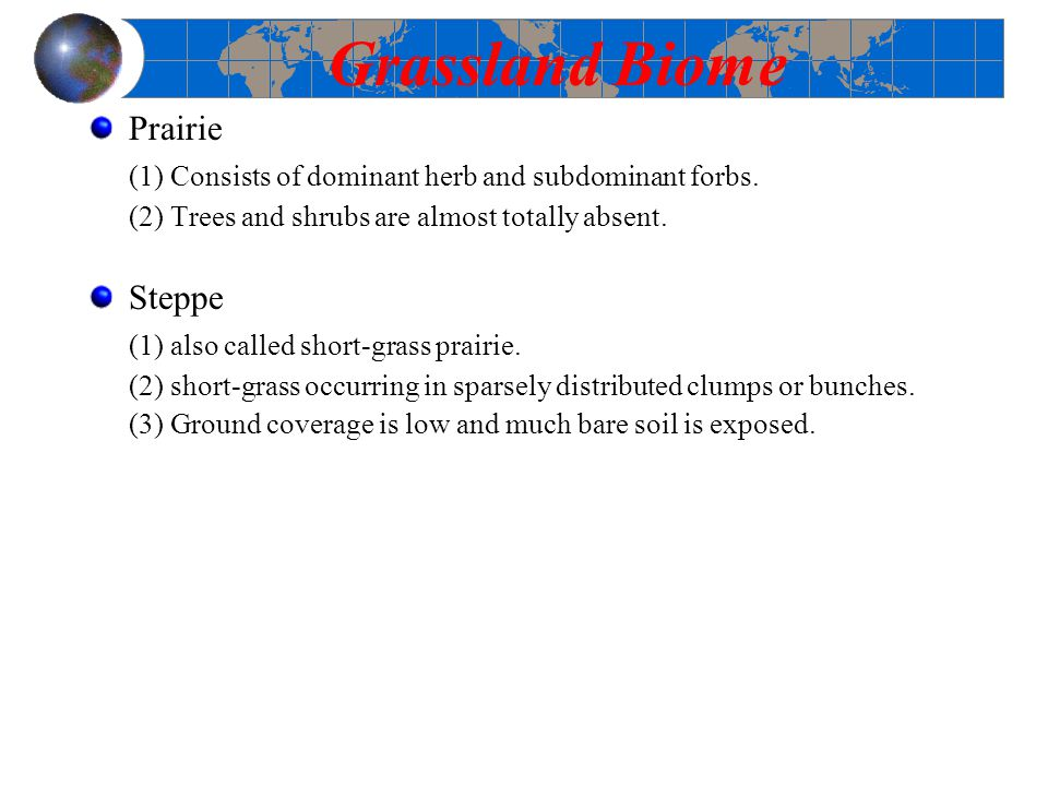 Grassland Biome Prairie
