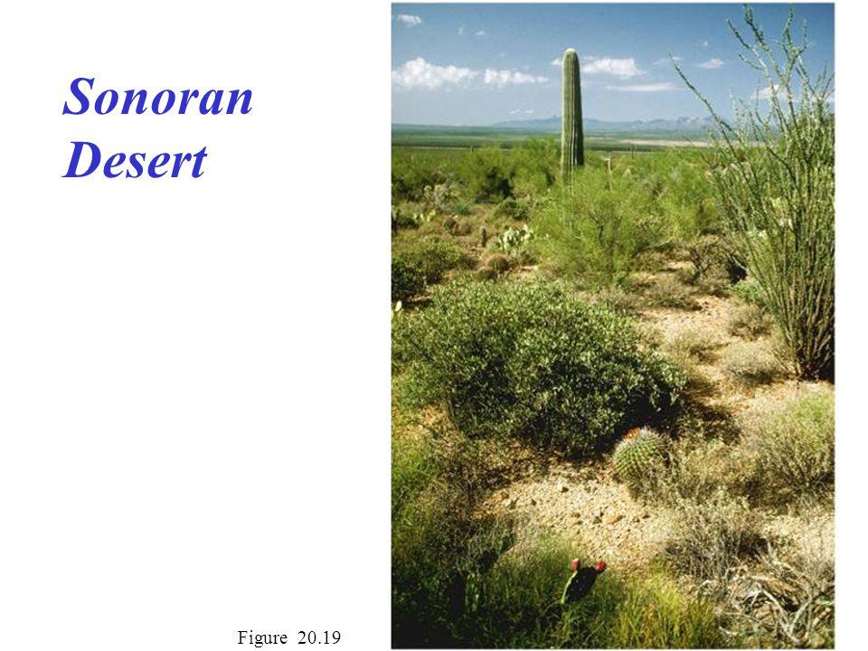 Sonoran Desert Figure 20.19