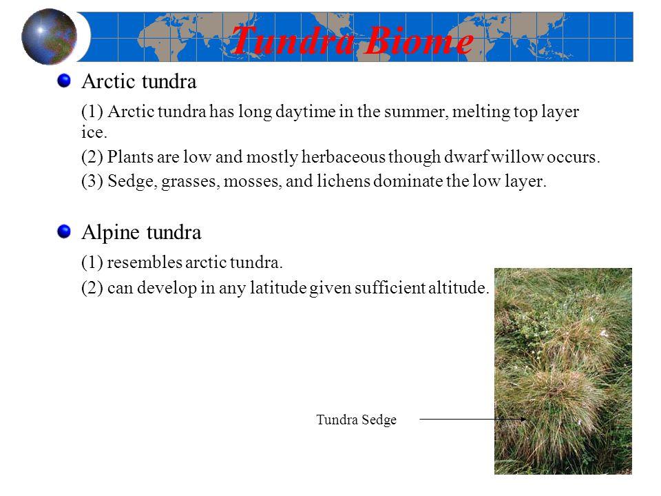 Tundra Biome Arctic tundra