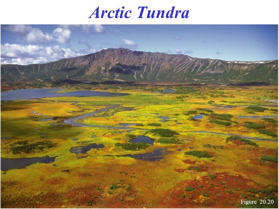 Arctic Tundra Figure 20.20