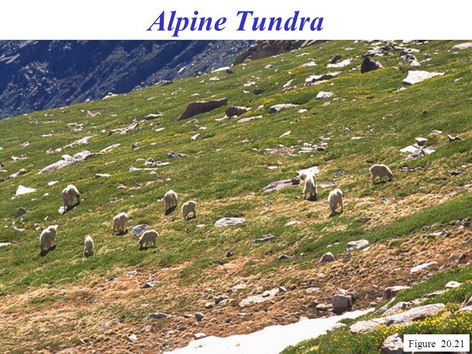 Alpine Tundra Figure 20.21