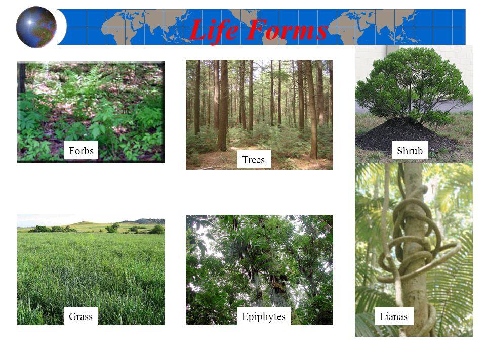 Life Forms Forbs Shrub Trees Grass Epiphytes Lianas 5