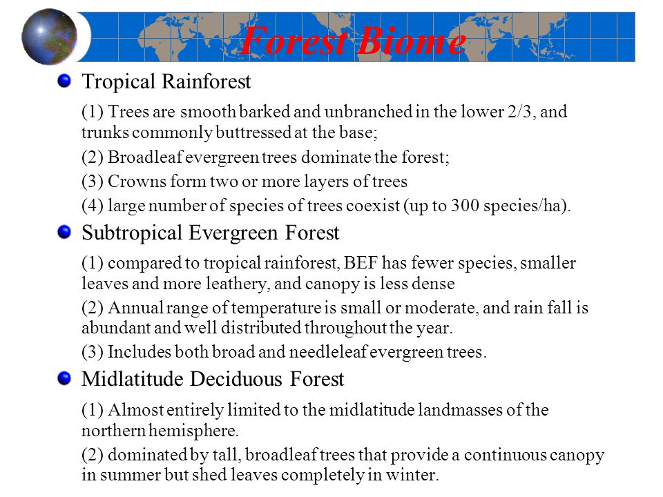 Forest Biome Tropical Rainforest