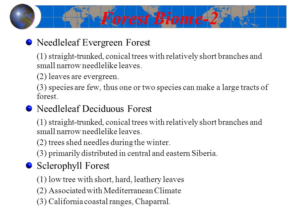 Forest Biome-2 Needleleaf Evergreen Forest