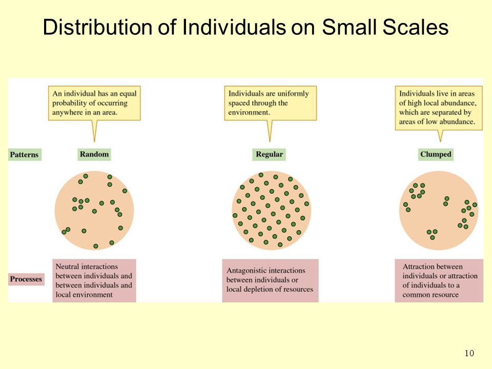 Distribution of Individuals on Small Scales