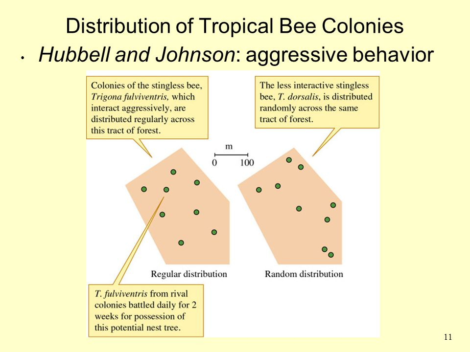 Distribution of Tropical Bee Colonies