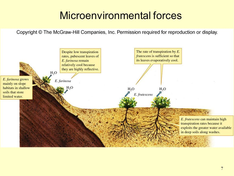 Microenvironmental forces