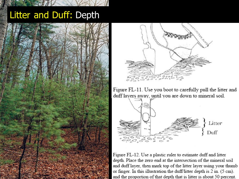 Litter and Duff: Depth