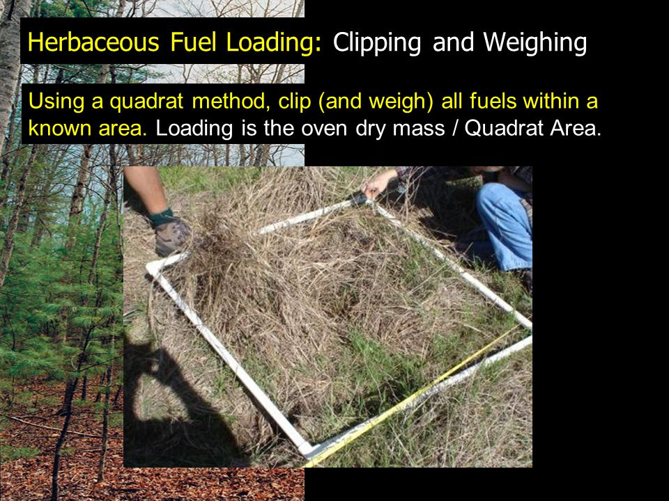 Herbaceous Fuel Loading: Clipping and Weighing