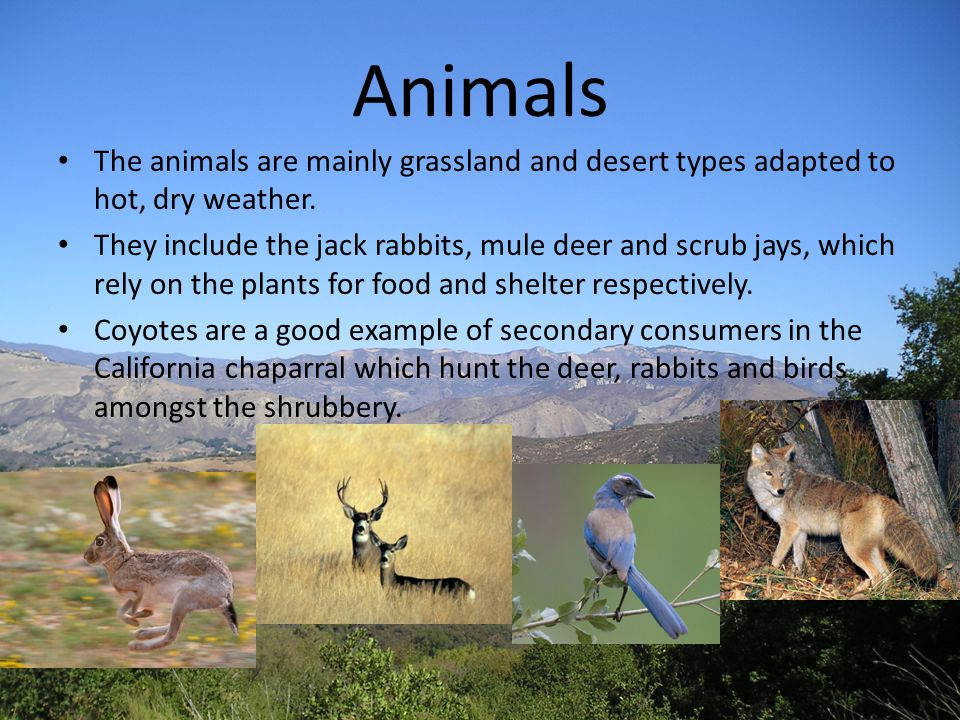 Animals The animals are mainly grassland and desert types adapted to hot, dry weather.