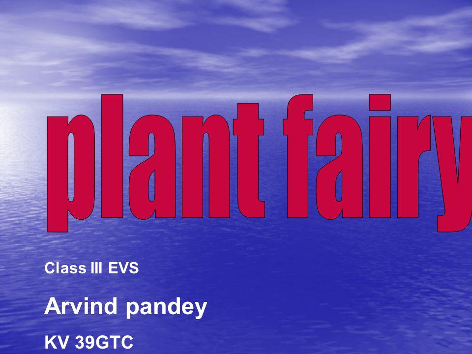 plant fairy Class III EVS Arvind pandey KV 39GTC