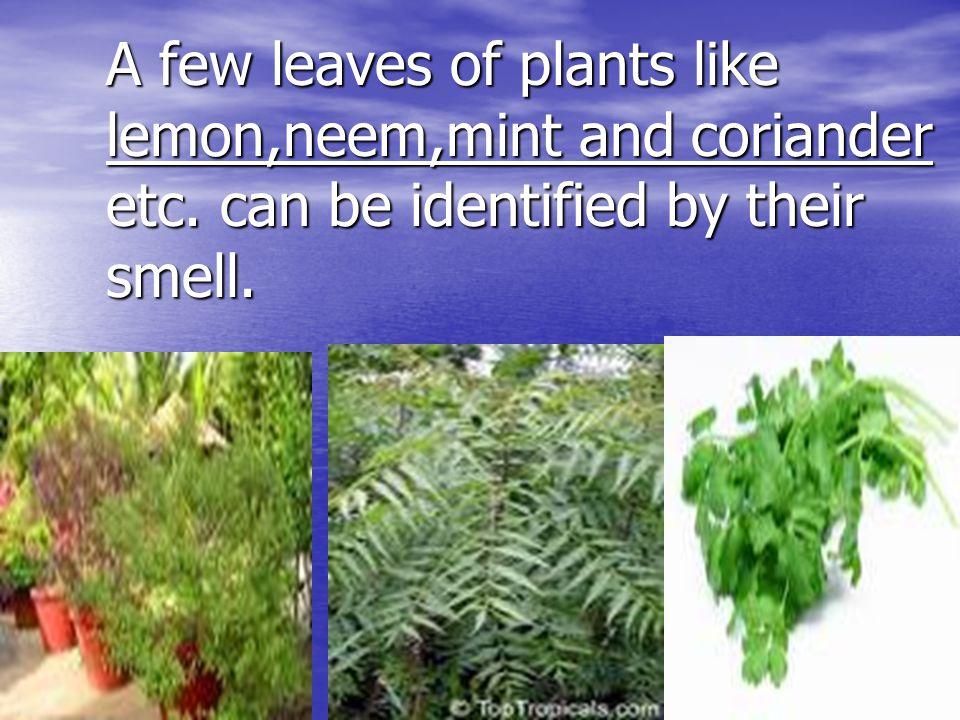 A few leaves of plants like lemon,neem,mint and coriander etc