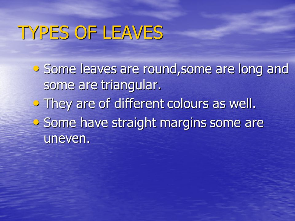 TYPES OF LEAVES Some leaves are round,some are long and some are triangular. They are of different colours as well.