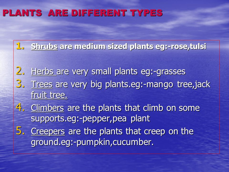 PLANTS ARE DIFFERENT TYPES