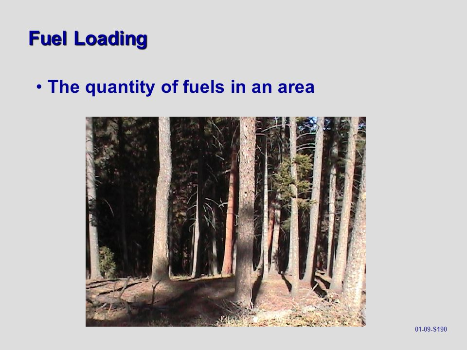 Fuel Loading The quantity of fuels in an area 01-09-S190