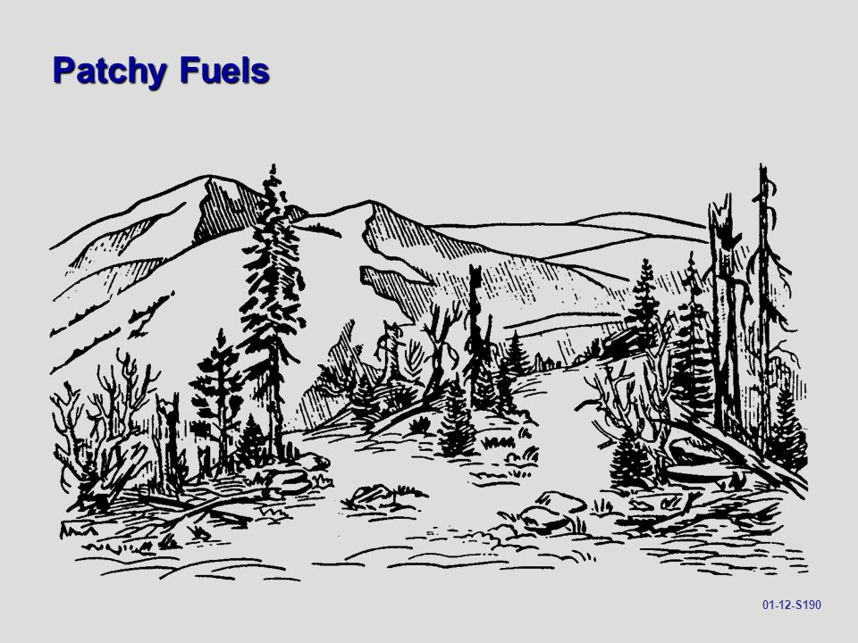 Patchy Fuels 01-12-S190