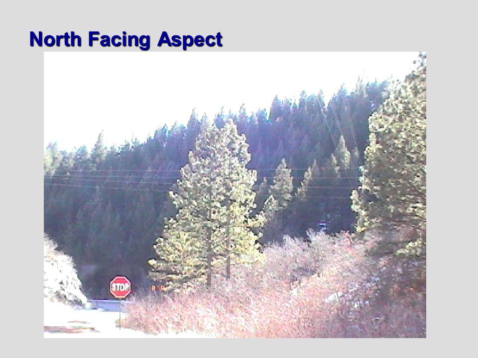 North Facing Aspect