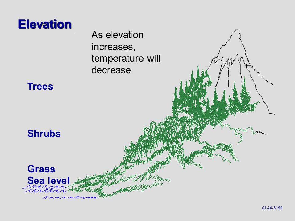 Elevation As elevation increases, temperature will decrease Trees