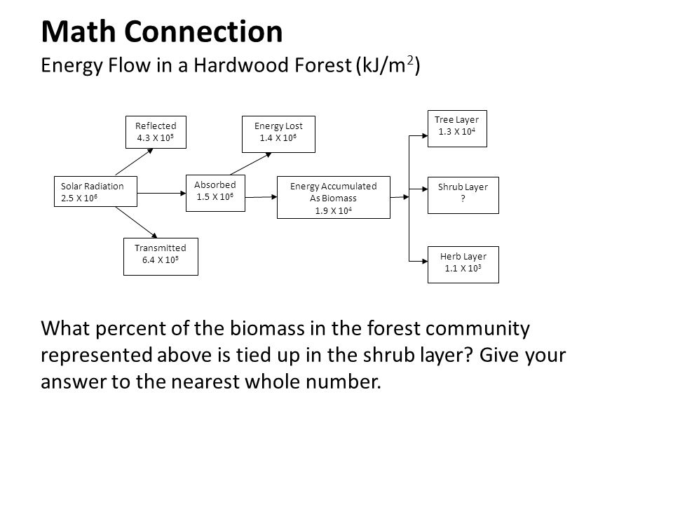 Math Connection Energy Flow in a Hardwood Forest (kJ/m2)