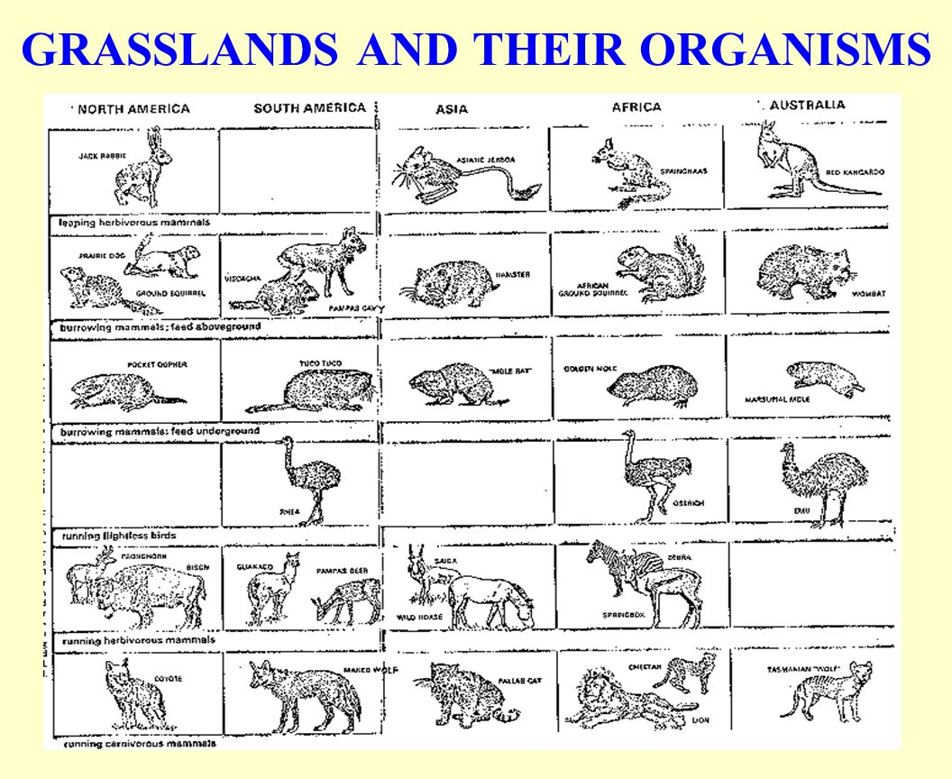 GRASSLANDS AND THEIR ORGANISMS