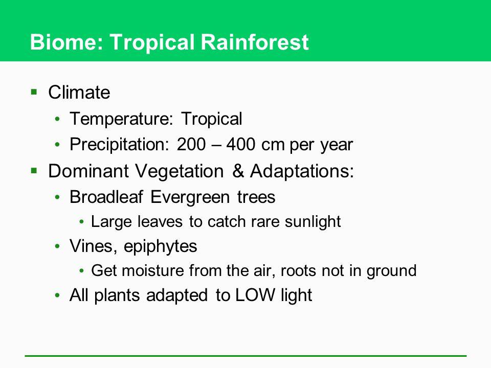 Biome: Tropical Rainforest