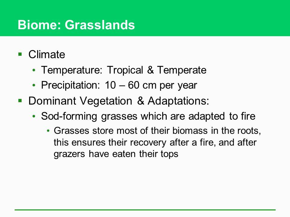 Biome: Grasslands Climate Dominant Vegetation & Adaptations: