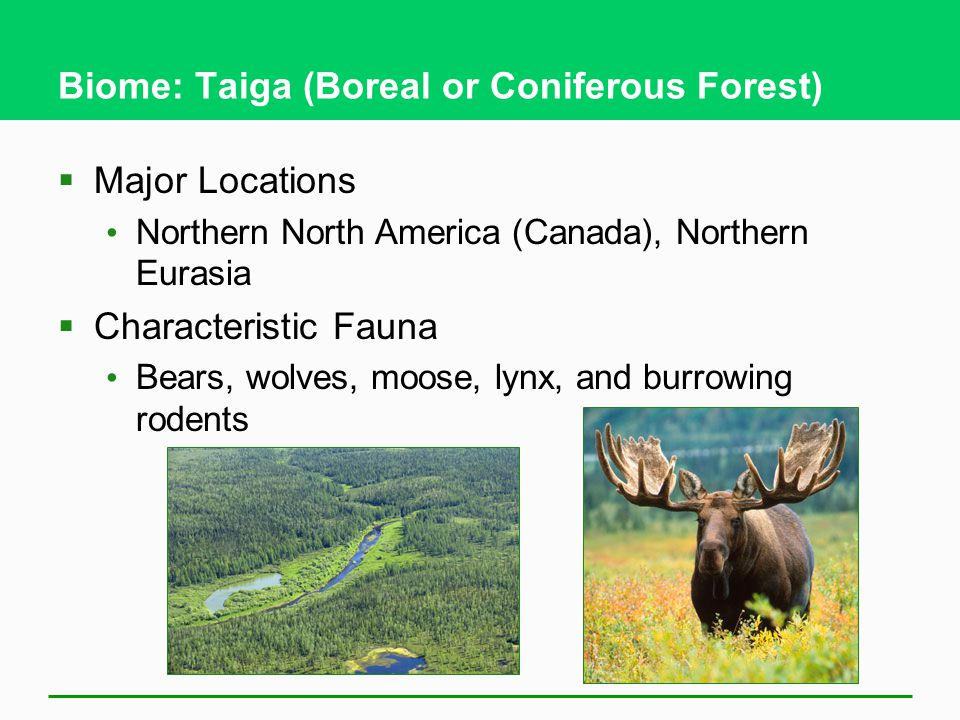 Biome: Taiga (Boreal or Coniferous Forest)