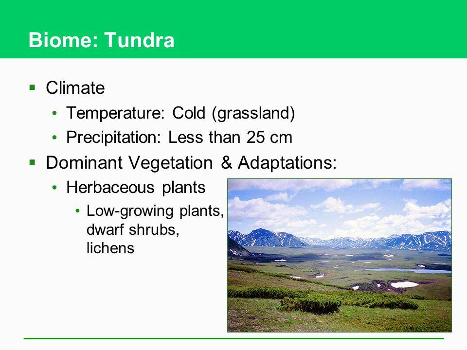 Biome: Tundra Climate Dominant Vegetation & Adaptations:
