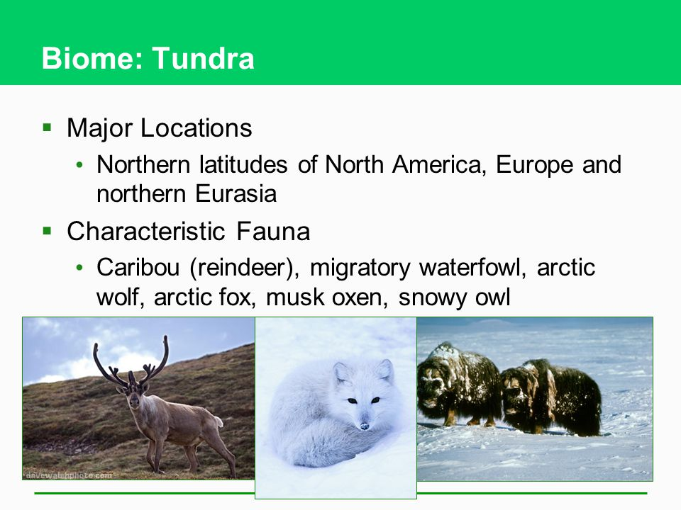 Biome: Tundra Major Locations Characteristic Fauna