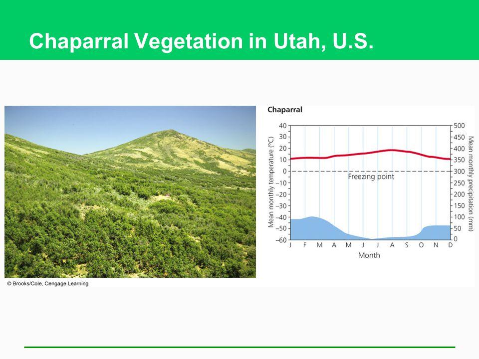 Chaparral Vegetation in Utah, U.S.