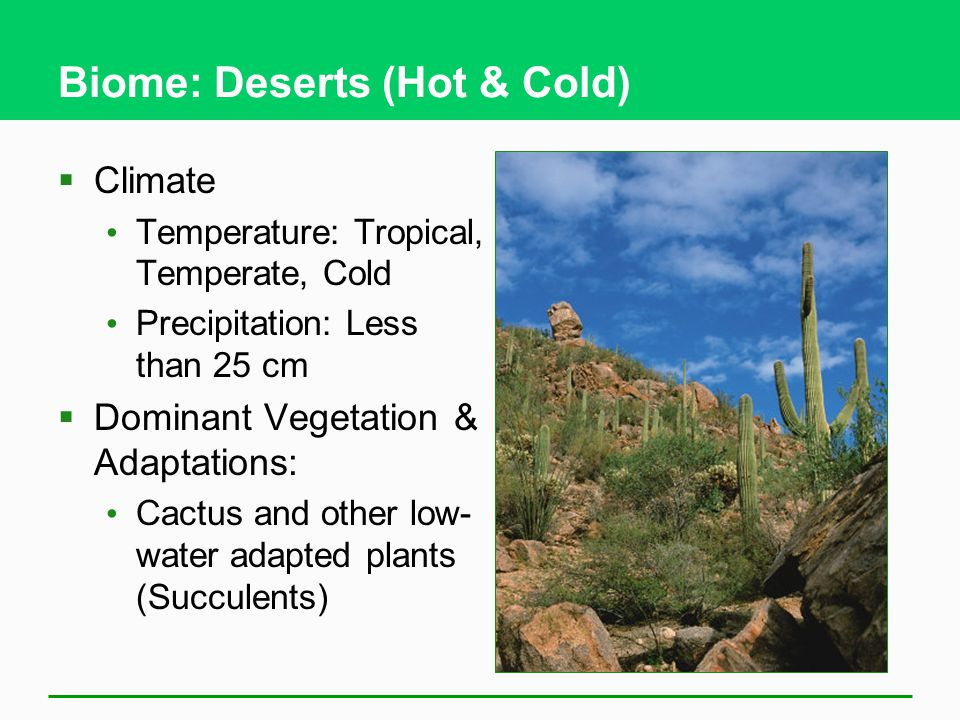 Biome: Deserts (Hot & Cold)
