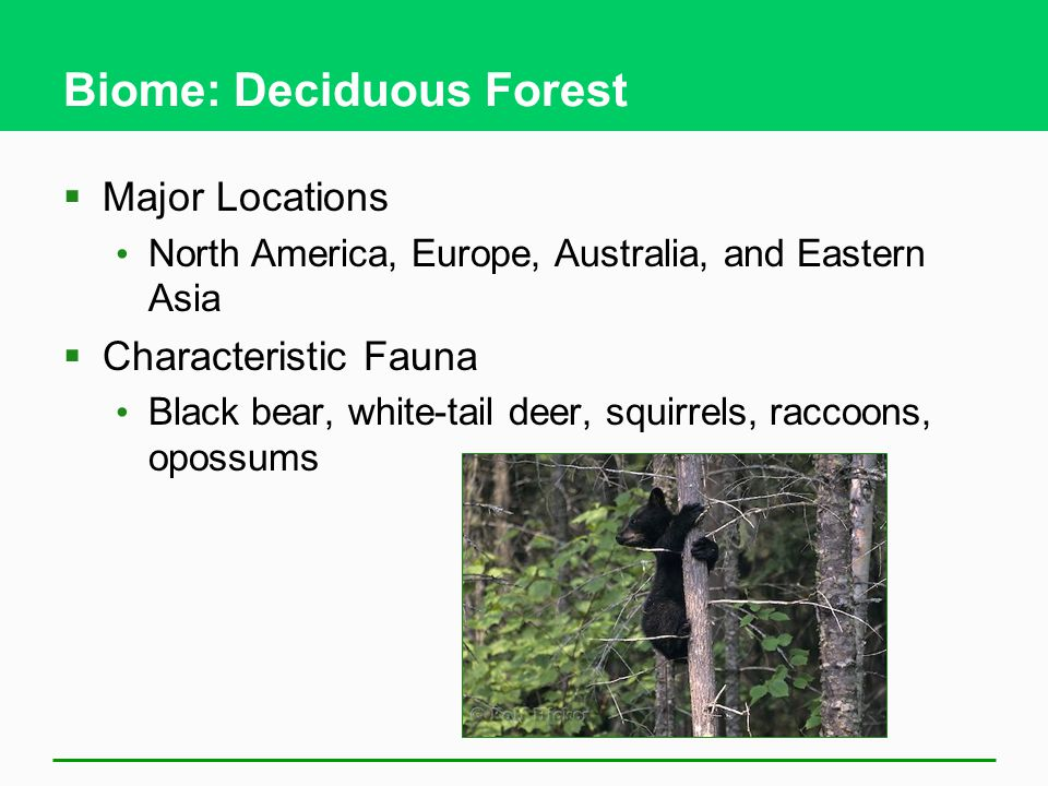 Biome: Deciduous Forest