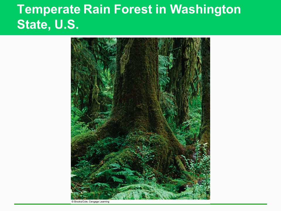 Temperate Rain Forest in Washington State, U.S.