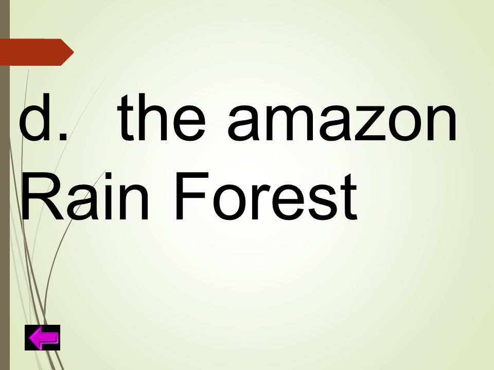 d. the amazon Rain Forest