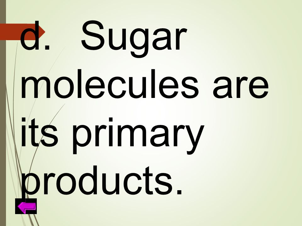 d. Sugar molecules are its primary products.