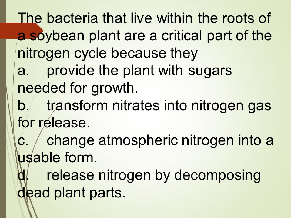 The bacteria that live within the roots of a soybean plant are a critical part of the nitrogen cycle because they