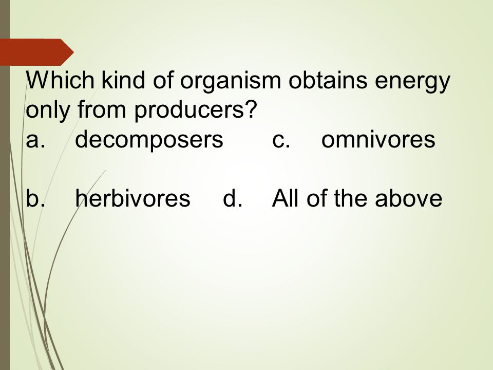 Which kind of organism obtains energy only from producers