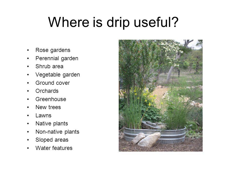 Where is drip useful Rose gardens Perennial garden Shrub area