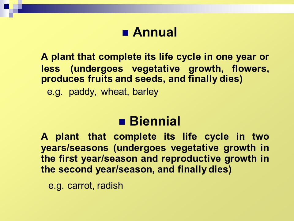 Annual A plant that complete its life cycle in one year or less (undergoes vegetative growth, flowers, produces fruits and seeds, and finally dies)