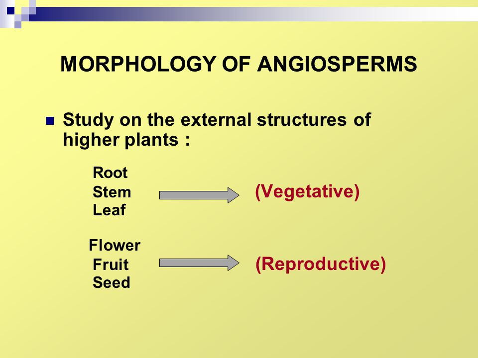 MORPHOLOGY OF ANGIOSPERMS