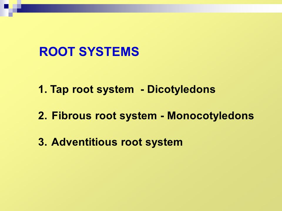 ROOT SYSTEMS 1. Tap root system - Dicotyledons