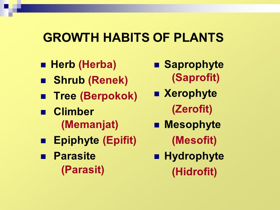 GROWTH HABITS OF PLANTS