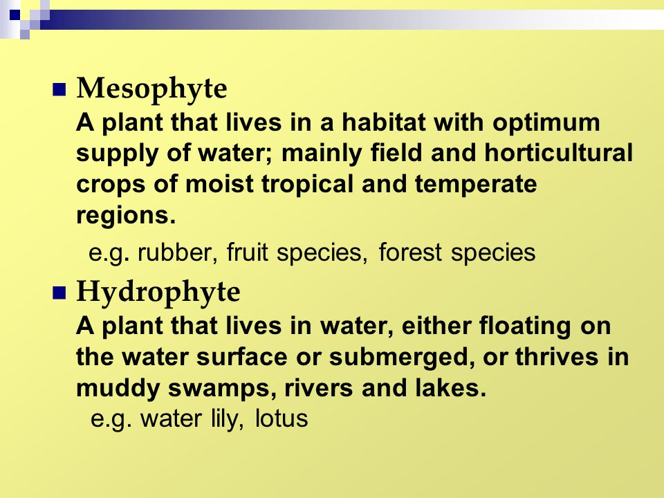Mesophyte A plant that lives in a habitat with optimum supply of water; mainly field and horticultural crops of moist tropical and temperate regions.