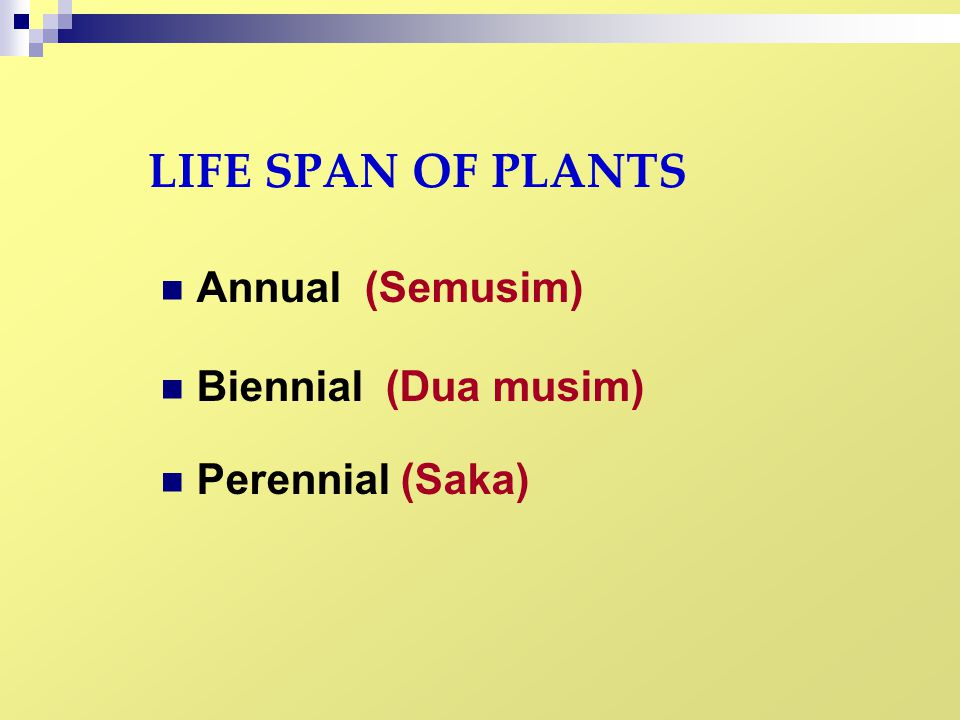 LIFE SPAN OF PLANTS Annual (Semusim) Biennial (Dua musim)