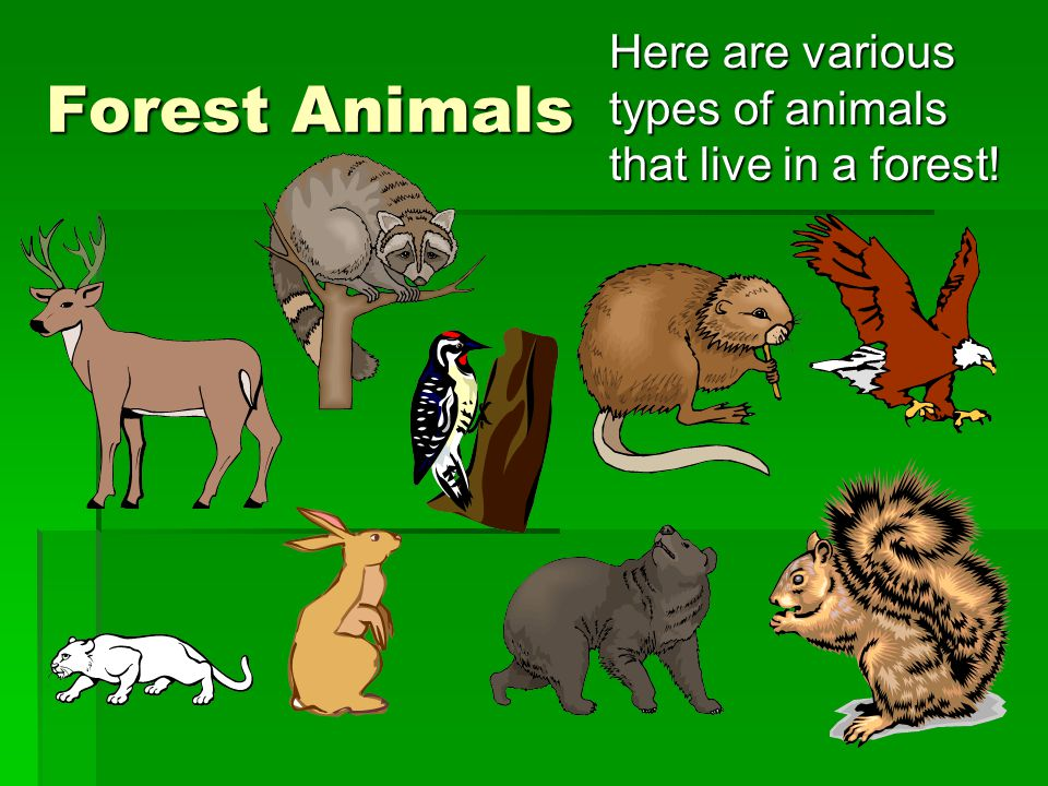 Here are various types of animals that live in a forest!