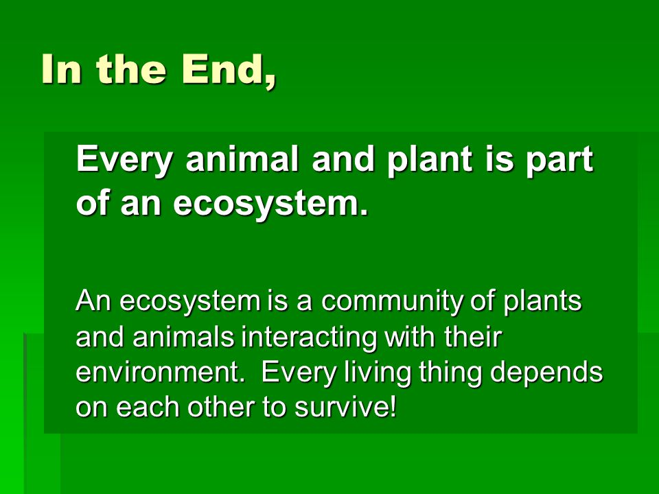 In the End, Every animal and plant is part of an ecosystem.