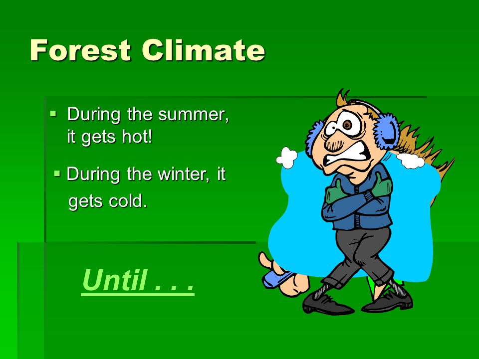 Forest Climate Until . . . During the summer, it gets hot!
